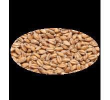 Солод пшеничный, 1 кг.